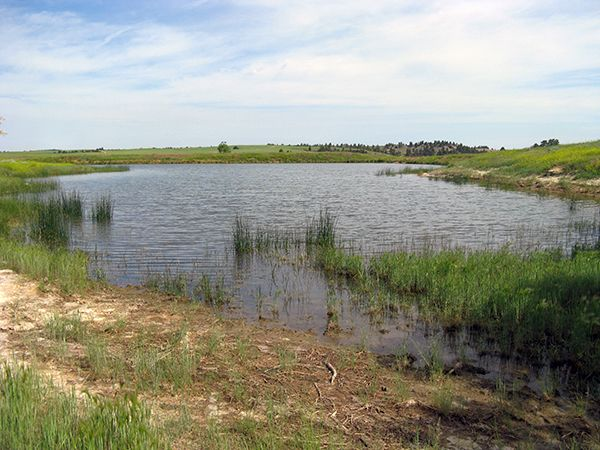 An image of a pond that is a habitat for amphibians.