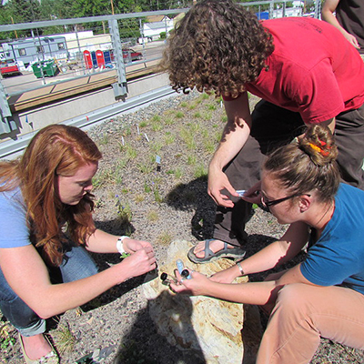 Undergradute Education - LInk - Image of undergraduate students working on the Green Roof.