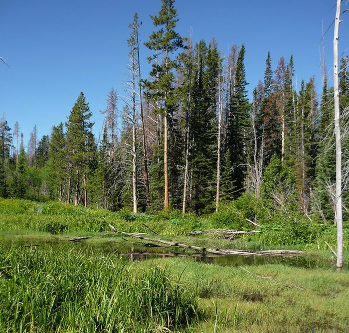 Image of Wood Frog habitat
