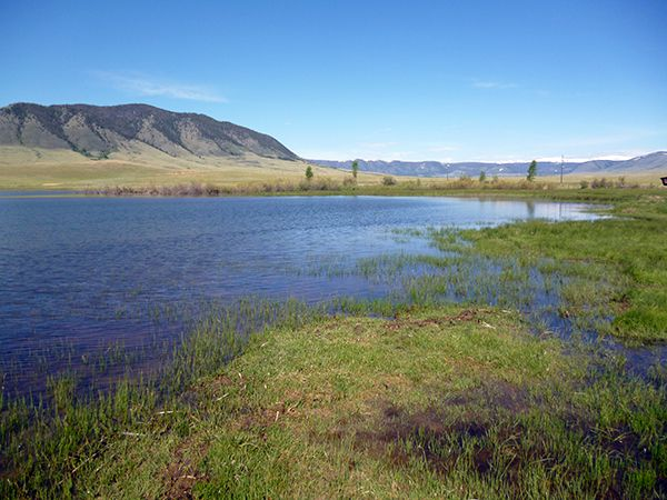 A picture of Boreal Chorus Frog habitat.