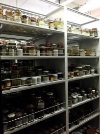 Photo of jars in storage