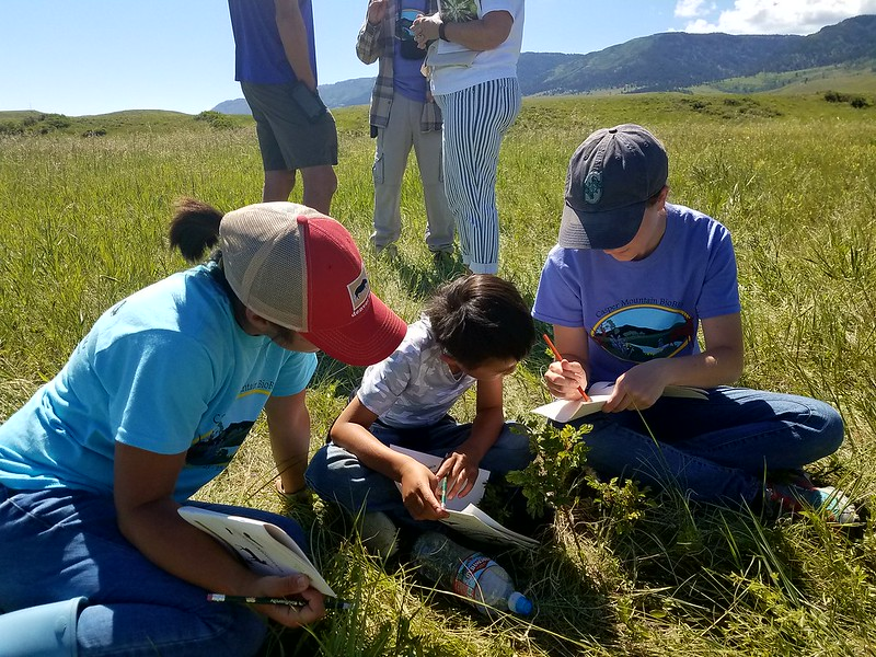 Young people participating in the Wyoming Bioblitz community Science project.